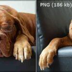 PNG vs JPG: что лучше для вашего сайта?